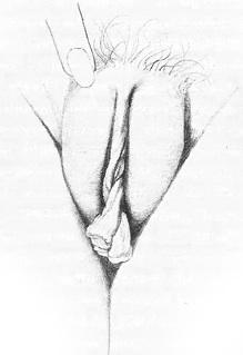 Расположение половых органов у девушки видео порно, фото ебут в попу в платье
